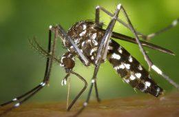 Malaria Prophylaxe Vorkommen